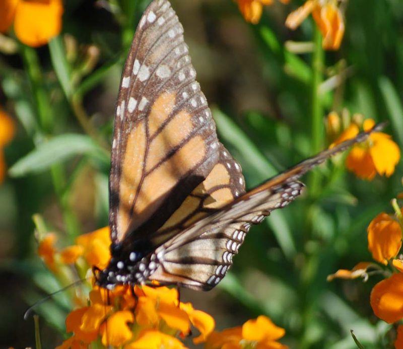 ButterflyAp18b