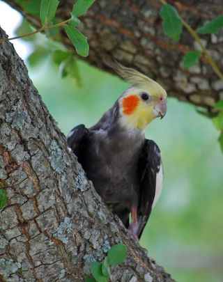 Lost bird2