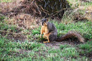SquirrelJun14