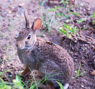 BunnyAug8