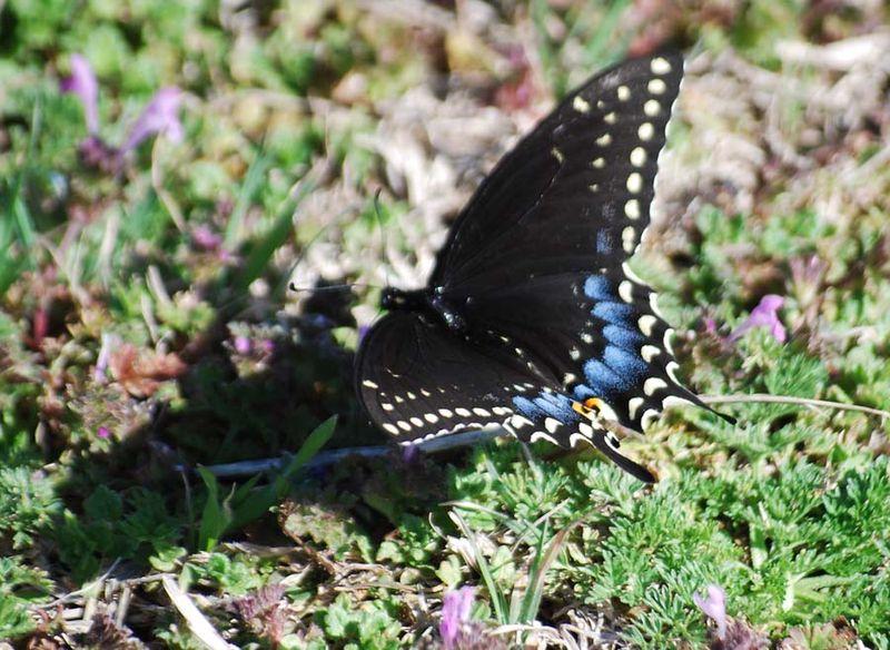 ButterflyMar19c