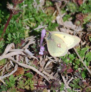 ButterflyMar19