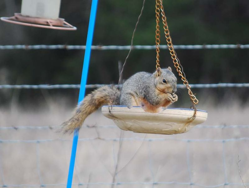 SquirrelMar21a