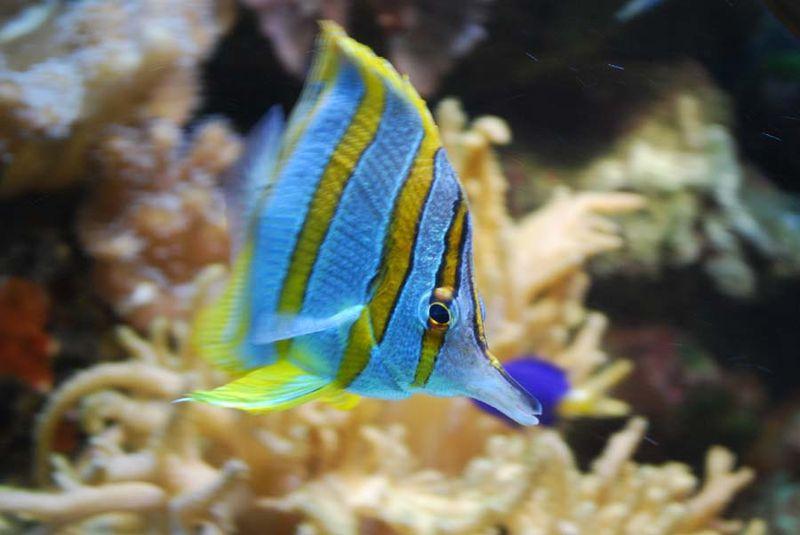 Fish9