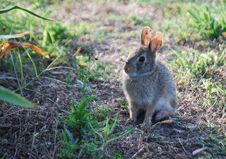 RabbitJun17a