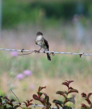 BirdJun21a