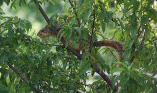 SquirrelJul12h