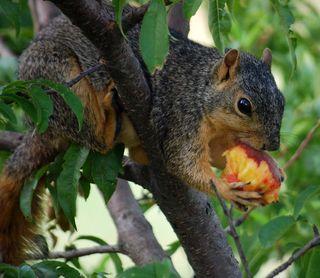 SquirrelJul12g