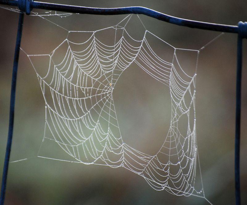 SpiderwebJul24b