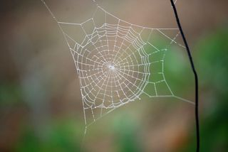 SpiderwebJul24a
