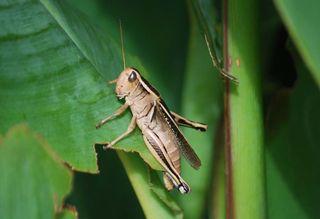 GrasshopSept14