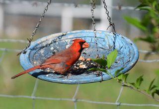CardinalApr18a