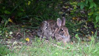 RabbitMay19