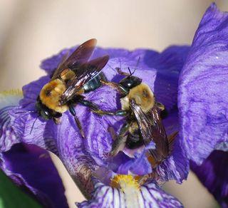 BeesApr14