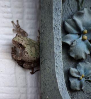 FrogAug4