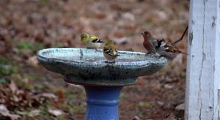 Birdbath5