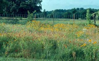 WildflowersLiberty