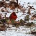 Birds in January