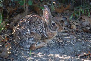 RabbitMay29