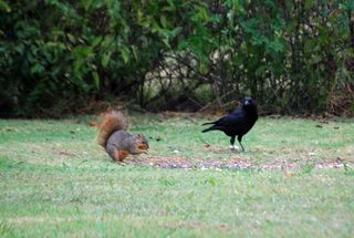 SquirrelOct11a