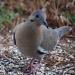 Dove February