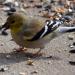 Finch February