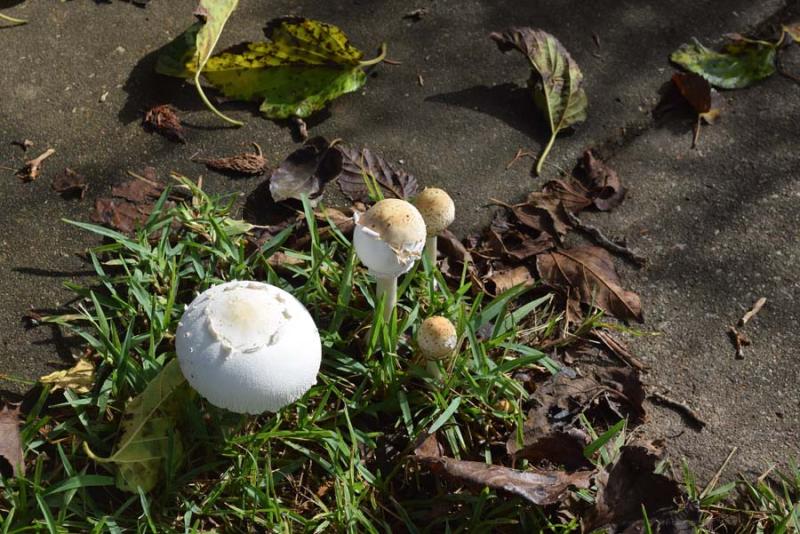 MushroomsAug23