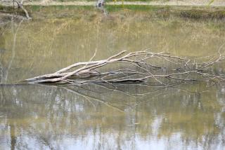 Treepond