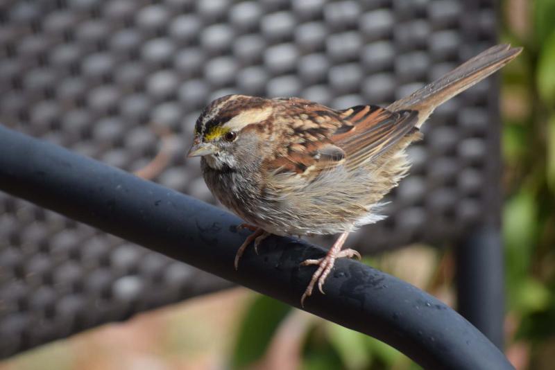 SparrowDec21