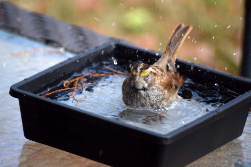 Sparrowbath21b