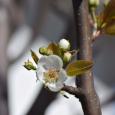 Blossom24