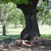 Blacksmith tree