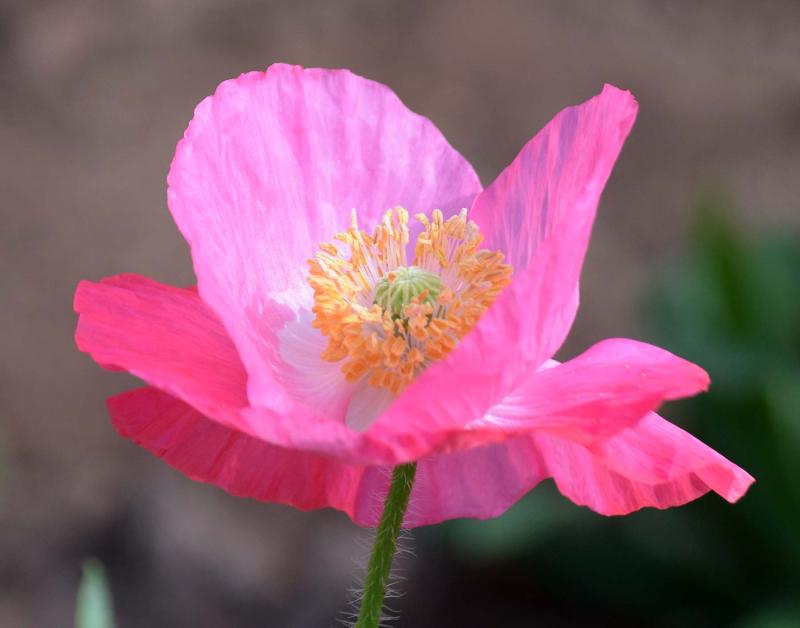 Pinkpop4april2