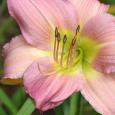 Lilyclose28b