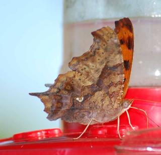 ButterflySep5b