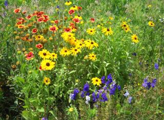 Wildflowersmay25
