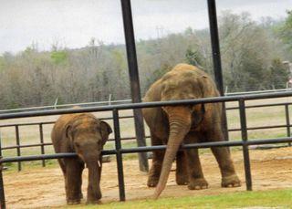 Elephantfarm