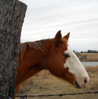 HorseJan