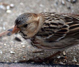 SparrowJan24face3