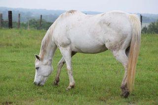 HorseMay8