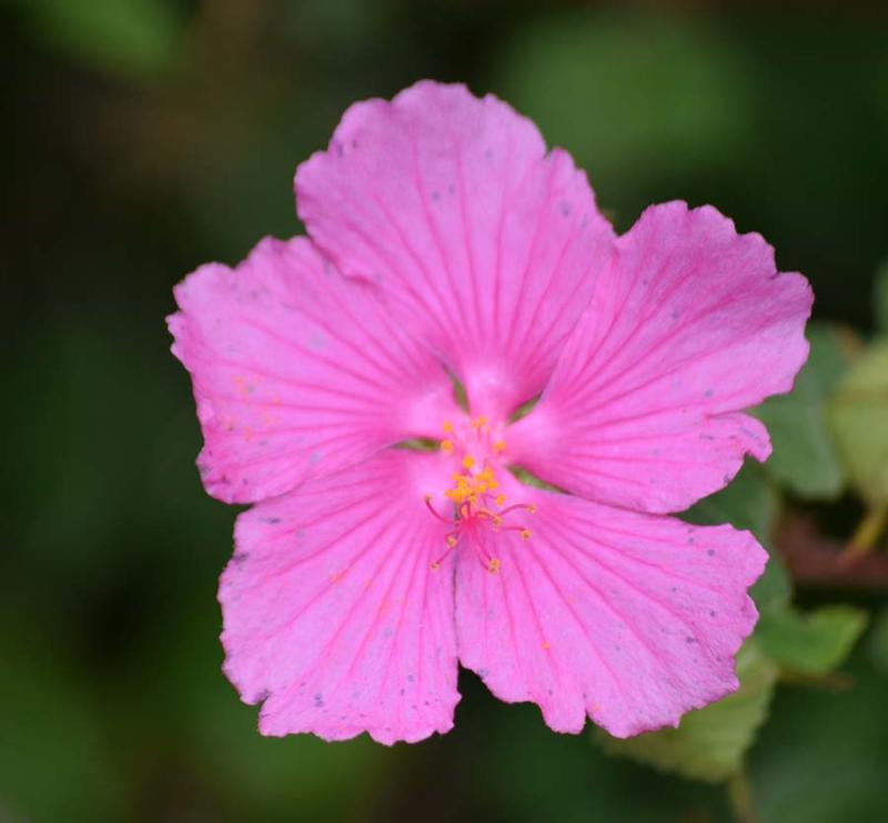 PinkAug3