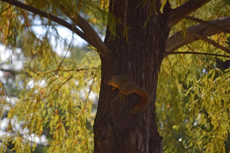Squirrel25