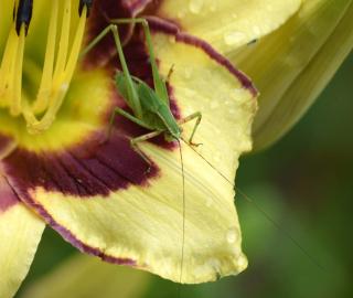 Grasshop24a_edited-1