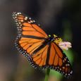Monarch20d