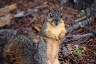Squirrel23
