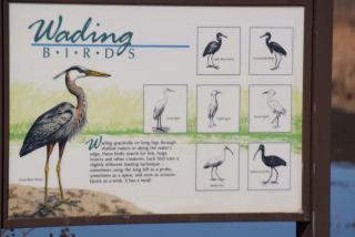 Birdsign