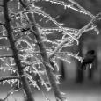 Treebird21BW