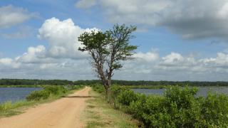 Tree16a