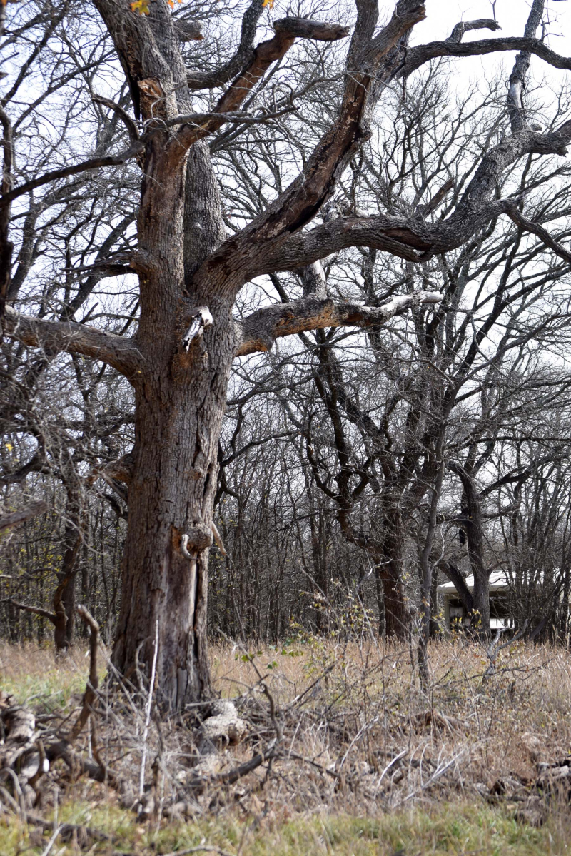 Tree24M