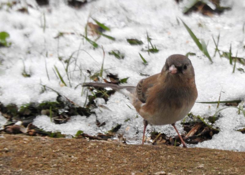 Bird19b